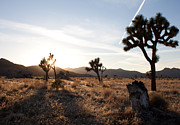 Den Decor Photo Prints - Joshua Tree Sunset Print by John Daly