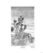 Desert Drawings Metal Prints - Joshua Tree Yucca Brevifolia Metal Print by Arthur Eggers