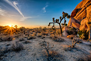 Joshua Tree Prints - Joshuas Sunset Print by Peter Tellone