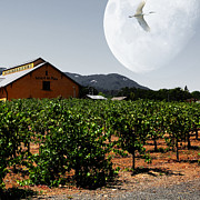 Grape Vineyards Posters - Journey Through The Valley of The Moon 5D24485 square Poster by Wingsdomain Art and Photography