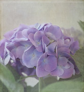 Purple Hydrangea Photos - Joy Is.... by Kim Hojnacki