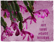 Christmas Cactus Art - Joy Love Peace Believe by Sylvia Thornton