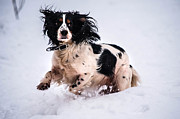 Doggy Photos - Joy of Snow by Jenny Rainbow