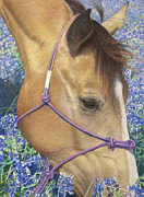 Horse Drawing Prints - Joy of Spring Print by Helen Bailey