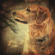 Golden Retriever Photos - Judy by Taylan Soyturk