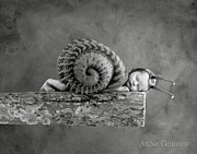 Black-and-white Posters - Julia Snail Poster by Anne Geddes