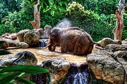 Little Elephant Framed Prints - Jumbo Shower Framed Print by Ray Warren