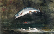 Steelhead Posters - Jumping Trout Poster by Winslow Homer