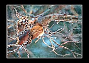 Debbie Portwood - Junco on Icy Branch