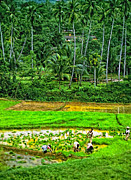 Rice Paddy Posters - Jungle Homestead impasto version Poster by Steve Harrington