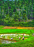 Rice Paddy Prints - Jungle Homestead paint version Print by Steve Harrington