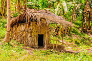 Bamboo House Photo Prints - Jungle Hut In A Tropical Rainforest Print by Colin Utz