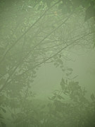 Haze Photo Posters - Jungle Mist Poster by Shannon Workman