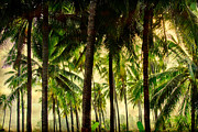 Coconut Trees Framed Prints - Jungle Paradise Framed Print by James Bo Insogna