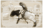 Steer Framed Prints - Junior Ride Framed Print by Lisa Moore