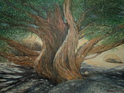 Juniper Paintings - Juniper Tree on Live Oak Trail by Sandra Lytch