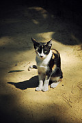 HJBH Photography - Just a cat