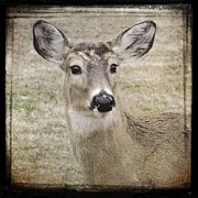 Muted Framed Prints - Just A Deer Framed Print by Gothicolors And Crows