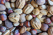 Almonds Prints - Just A Little Nutty Print by Heidi Smith