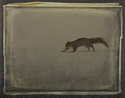 Vintage Style Photograph Posters - Just A Squirrel Poster by Gothicolors And Crows
