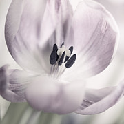 HJBH Photography - Just a tulip