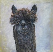 Alpacas Framed Prints - Just call me Commander Drew Framed Print by Elizabeth  Ellis