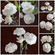 John Tidball  - Just Carnations
