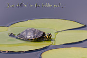 Lily Pad Greeting Cards Posters - Just Chillin in the Kiddie Pool Poster by Jeff Abrahamson