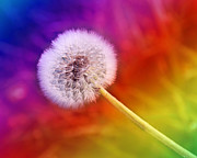All Dandelion Sale Sale Sale Though April 30 - Just Dandy Rainbow by Andee Photography