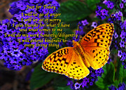 Blooms  Butterflies Posters - Just for Today 8 Poster by ABeautifulSky  Photography