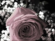Mauve Roses Photo Acrylic Prints - Just For You Acrylic Print by Angela Davies