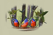 Trio Framed Prints - Just Hanging Around Framed Print by Bonnie Barry