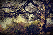 Oak Trees Prints - Just How it Ought to Be Print by Laurie Search