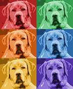 Photoshop Cs5 Metal Prints - Just Labs Metal Print by Rachel Counts