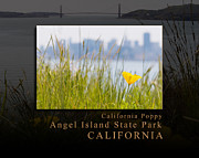 Nike Photo Framed Prints - Just One California Poppy at Angel Island State Park - San Francisco Bay California Framed Print by David Rigg
