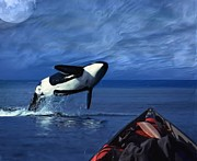 Orca Digital Art Acrylic Prints - Just Paddlin Along Acrylic Print by Jack Zulli