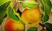 Judy Palkimas - Just Pears
