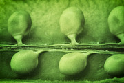 Tom Mc Nemar - Just Peas in a Pod