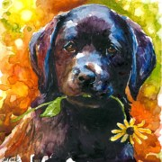 Black Lab Puppy Paintings - Just Picked by Molly Poole
