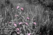 Florida Flowers Prints - Just Pink Print by Debra Forand
