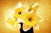 Stem Mixed Media - Just Plain Daffy 1 - Flora - Spring - Daffodil - Narcissus - Jonquil by Andee Photography