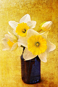Isolated Digital Art - Just Plain Daffy 2 In - Flora - Spring - Daffodil - Narcissus - Jonquil  by Andee Photography