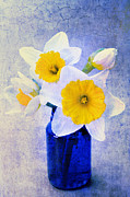 Vase Mixed Media Posters - Just Plain Daffy 2 In Blue - Flora - Spring - Daffodil - Narcissus - Jonquil  Poster by Andee Photography