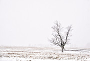 Country Scene Photos - Just The Tree by Emily Stauring