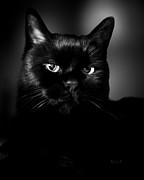 Black Feline Framed Prints - Just Thinking Framed Print by Bob Orsillo