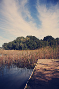 Reeds Photos - Just to Make This Dock My Home by Laurie Search