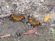 Checkerspot Prints - Just two Print by Eric Noa