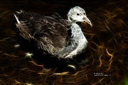Juvenile Coot 9042 - F Print by James Ahn