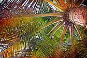 A New Focus Photography - Kaleidescope Palm