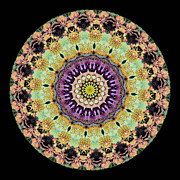 Kaleidoscope Ernst Haeckl Inspired Sea Life Series Print by Amy Cicconi